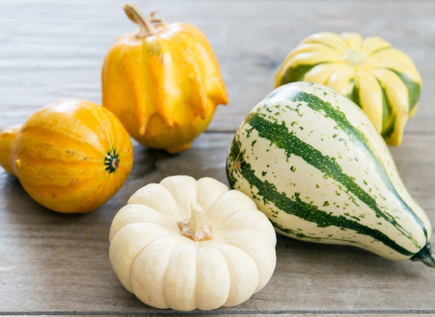 Assorted mini pumpkin and gourds