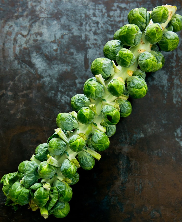 overhead photo of a Brussels Sprouts Stalk