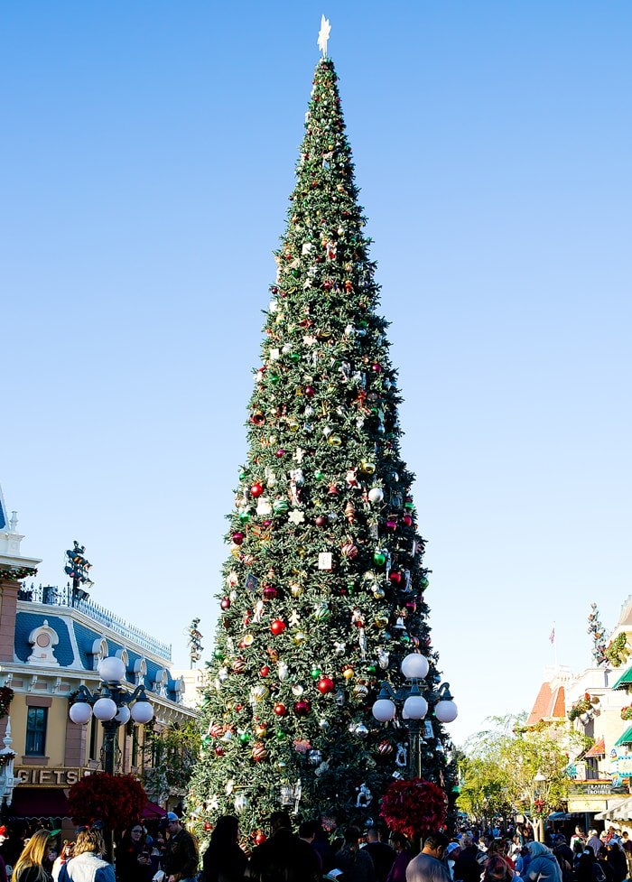 photo of the Christmas tree at Disney