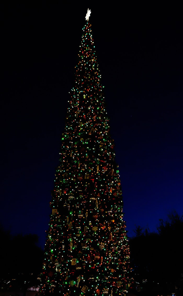 disneyland-christmas-9