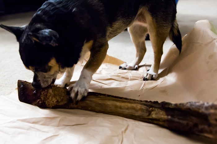 photo of a dog with a bone
