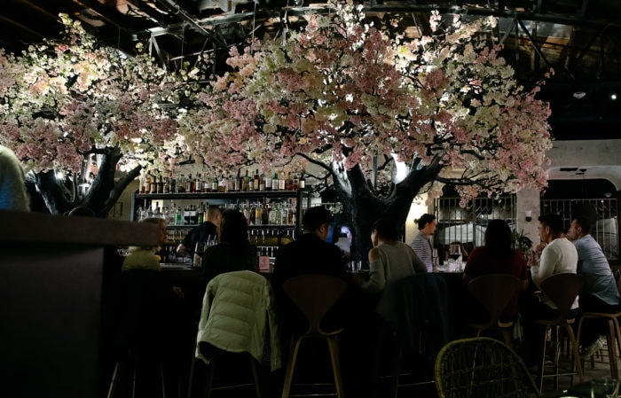 photo of the trees inside Cloak & Petal